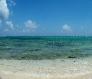 More Must See Coral Reefs of the Keys