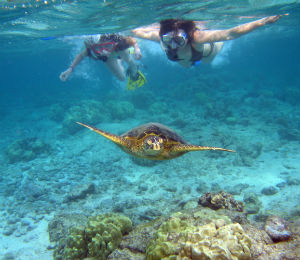 Learn Some Basic Snorkeling Skills
