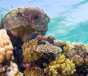 Secret Key West Snorkeling Reef Locations