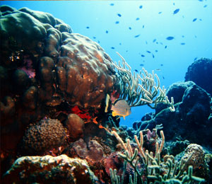 Snorkeling the Key West Living Coral Reefs